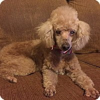 Adopt A Pet :: Maci - St. Francisville, LA