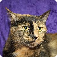 Adopt A Pet :: Tazo - Jackson, MI