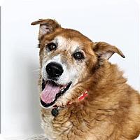 Adopt A Pet :: Fremont - San Luis Obispo, CA