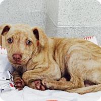 Adopt A Pet :: Mike - Atlanta, GA