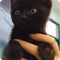 Adopt A Pet :: Kaylee - Keswick, ON