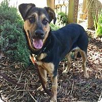 Adopt A Pet :: Kira - Penngrove, CA