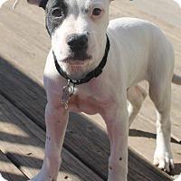 Adopt A Pet :: Mason - Ocala, FL