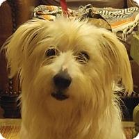 Adopt A Pet :: Calamity - Harrisonburg, VA