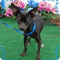 Adopt A Pet :: HAMMIE - Marietta, GA