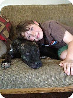 Pit Bull Terrier/Boxer Mix Dog for adoption in Fresno, California - Paloma