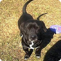 Adopt A Pet :: Bear    #X - Graceville, FL