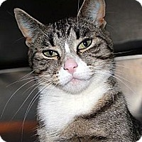 Adopt A Pet :: Kitty Pink Nose - Red Deer, AB