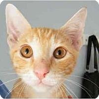 Adopt A Pet :: Tobie - Modesto, CA