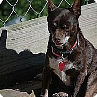 Adopt A Pet :: Choco (Courtesy List) - Richmond, VA