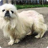 Adopt A Pet :: Micah - Mooy, AL