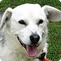 Adopt A Pet :: Hercules - Transfer, PA