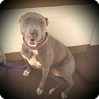 Adopt A Pet :: Rita - Cypress, CA