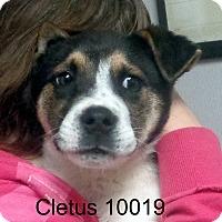 Adopt A Pet :: Cletus - baltimore, MD
