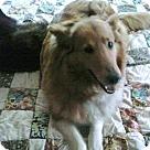 Adopt A Pet :: Annie