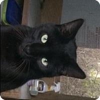 Adopt A Pet :: Poe - Mobile, AL