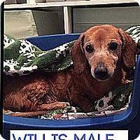 Adopt A Pet :: Mr. Willis (Senior Discount) - Allentown, PA