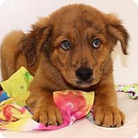 Adopt A Pet :: Ferris - Glastonbury, CT