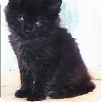 Adopt A Pet :: Baby Girl K2 Aka Charlie Brown - Sherwood, OR