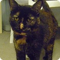 Adopt A Pet :: Gizmo - Hamburg, NY