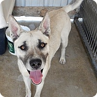 Adopt A Pet :: Ricky - Charleston, AR