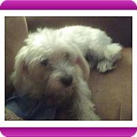 Adopt A Pet :: Pending!!Fiona - OH - Tulsa, OK