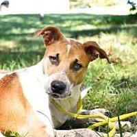 Adopt A Pet :: Tamera - Stillwater, OK