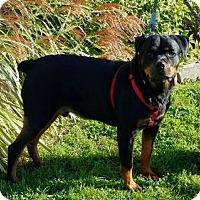 Adopt A Pet :: Reggie - Williamsburg, IA