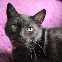 Adopt A Pet :: Emory II - Raleigh, NC