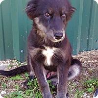 Adopt A Pet :: Yogi - Smithtown, NY