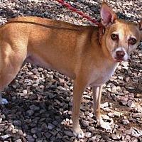 Adopt A Pet :: Jovi - Gilbert, AZ