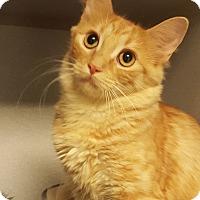 Adopt A Pet :: Elladora - Grayslake, IL