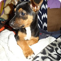 Adopt A Pet :: Wendy - Tomah, WI