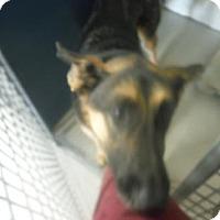 Adopt A Pet :: GABRIEL - Middletown, CT