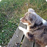 Adopt A Pet :: Miss Molly - Newport, KY