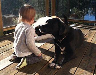 Labrador Retriever Mix Dog for adoption in Seattle, Washington - Stella