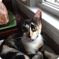 Adopt A Pet :: Hailey - Albany, NY