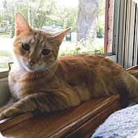 Adopt A Pet :: Rodney - Lombard, IL