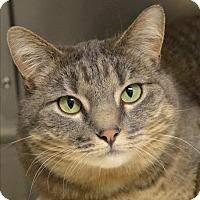 Adopt A Pet :: Corona - Sherwood, OR
