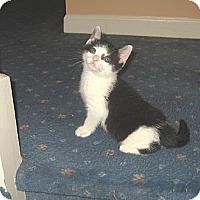 Adopt A Pet :: JAYDEN - 2013 - Hamilton, NJ