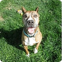 Adopt A Pet :: Mr. Biggs URGENT - Sacramento, CA
