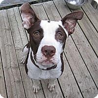 Adopt A Pet :: Flynn - Medicine Hat, AB