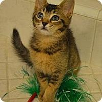 Adopt A Pet :: Brandy Daisy - Davis, CA