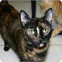 Adopt A Pet :: Gina - Lake Ronkonkoma, NY