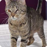 Adopt A Pet :: Tinker - Merrifield, VA