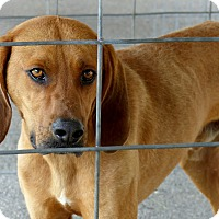 Adopt A Pet :: Copper--RESCUED! - Marlinton, WV