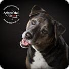 Adopt A Pet :: Theeni & Zoos