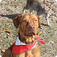 Adopt A Pet :: Harley - Morriston, FL