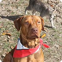 Adopt A Pet :: Harley - Morriston, FL