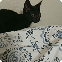 Adopt A Pet :: Diane - Davie, FL
